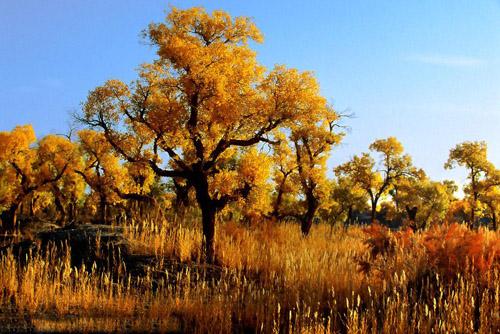 金塔胡杨林-在秋天里行走,开启你的行摄之旅
