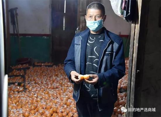 紧急求助!疫情难熬,百万斤湘西椪柑无人收,25.2元/10斤!仅剩20天!