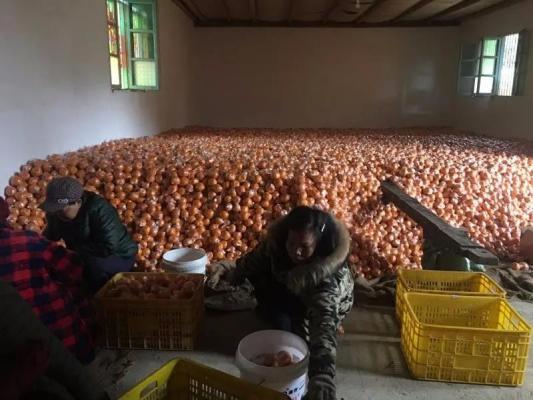 爱心助农,一场普通人帮助普通人的行动
